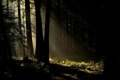lesní ráno