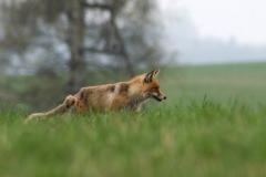 jarní lov
